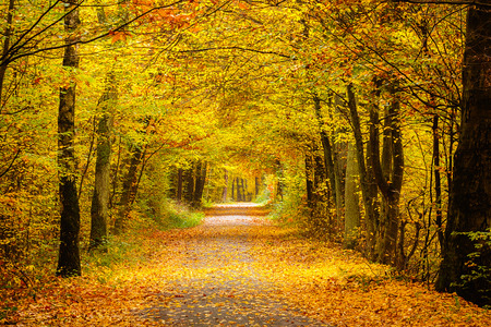 Autumn forest 免版税图像