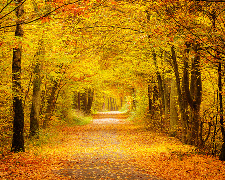 Autumn forest Banque d'images