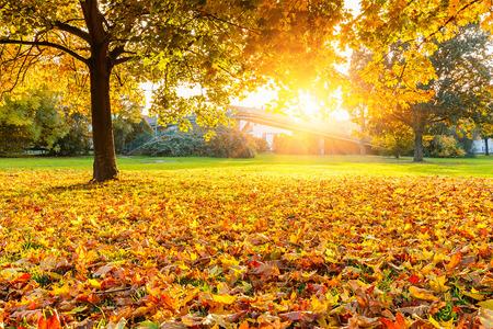 Sunny autumn park Stock Photo