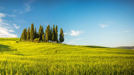 copse: Tuscany at spring