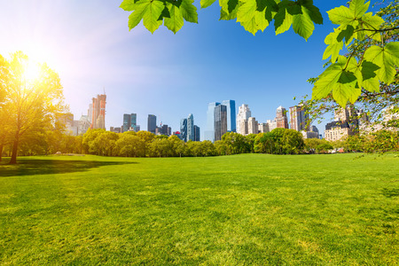 sunny sky: Central park, New York