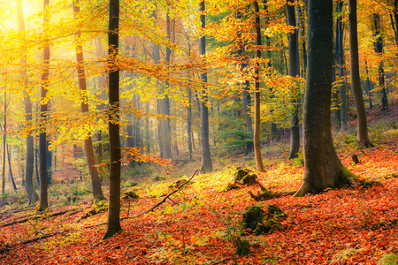 Kleurrijke en mistig herfstbos Stockfoto