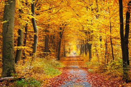 otoñales: Camino en el bosque de otoño Foto de archivo