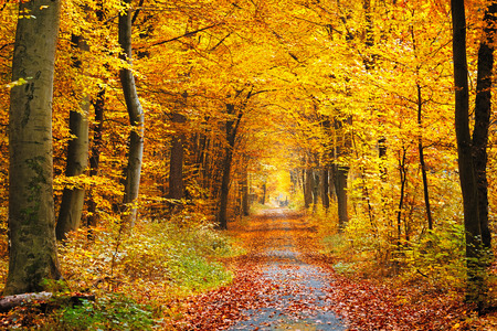 fall beauty: Road in the autumn forest