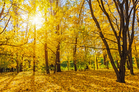 Colorful autumn park at sunny day Banque d'images