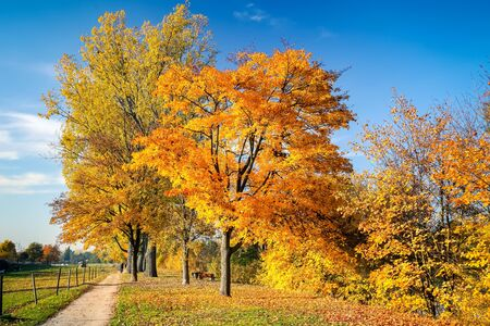 cielo azul: �rboles coloridos y cielo azul en el Parque de oto�o Foto de archivo