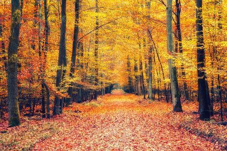 Traject in het-autumn forest  Stockfoto