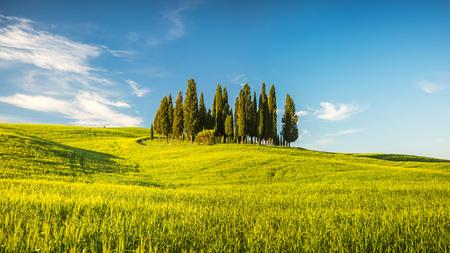 arboleda: Hermoso paisaje de la Toscana, Italia Foto de archivo
