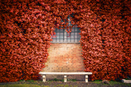 green building: Stone bench and autumn ivy foliage on the old wall