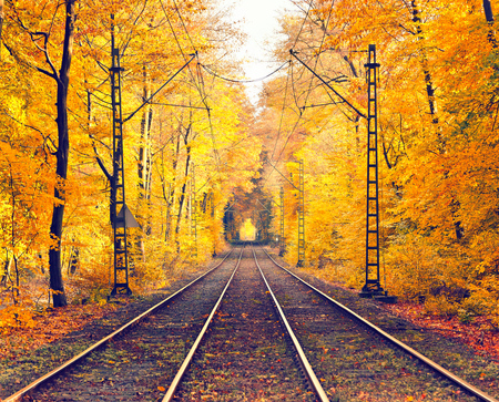 railway: Pathway in the foggy autumn park