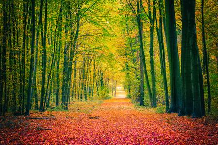 秋の公園での経路