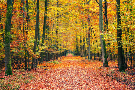 tree landscape: Pathway in the autumn forest