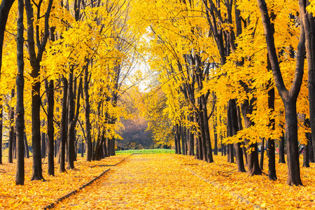 fall beauty: Alley in the bright autumn park Stock Photo