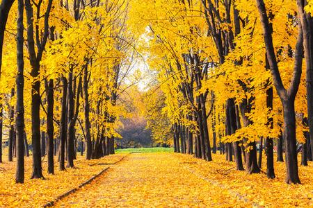 Alley in the bright autumn park Foto de archivo
