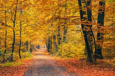 feuille arbre: Voie dans la forêt automne