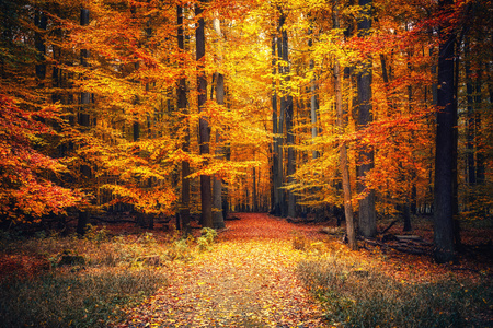 otoñales: Vía en el Parque de otoño