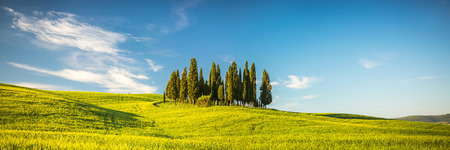 the tuscany: Beautiful landscape in Tuscany, Italy