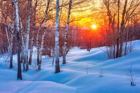 Colorato tramonto nella foresta di inverno