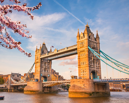 Tower bridge with cherry blossom, London Stock Photo