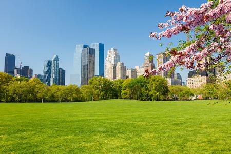 春の晴れた日、ニューヨーク市のセントラル ・ パーク