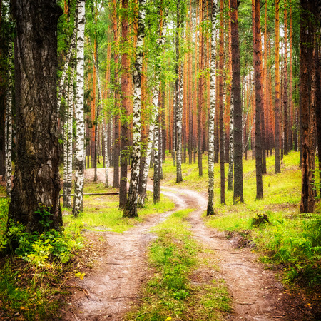 Country road in summer forest Banque d'images