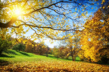 Sunny autumn landscape with golden trees and blue sky in countryside Banque d'images