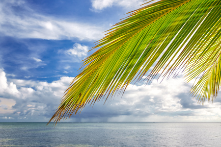 Palm tree leaf over ocean water on tropical beach in Dominican republic Standard-Bild