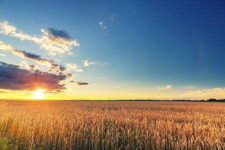 Puesta de sol sobre el campo de trigo en la campiña europea