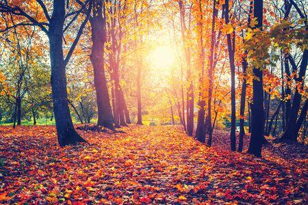 Aleja w słonecznym jesiennym parku