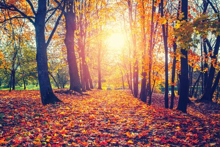 Alley in the sunny autumn park