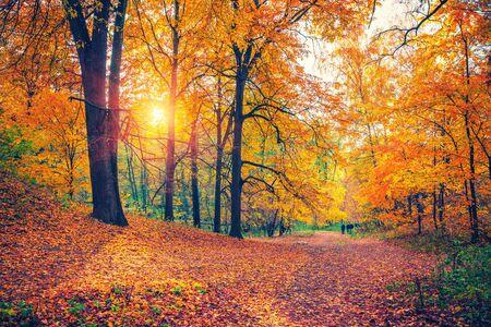 Jasne drzewa w jesiennym parku o zachodzie słońca