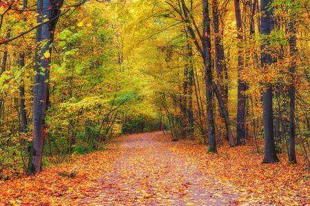 Chemin dans la forêt d'automne lumineuse