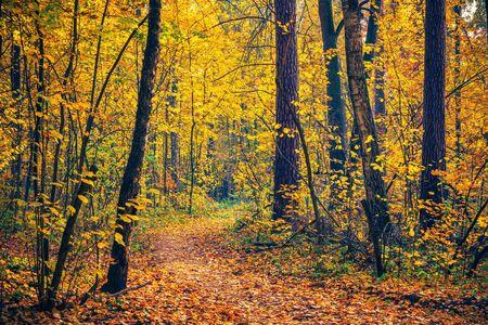 Camino en el bosque de otoño brillante