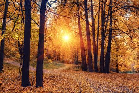 Pathway in the sunny autumn park Archivio Fotografico