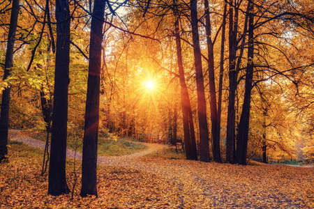 Pathway in the sunny autumn park Reklamní fotografie