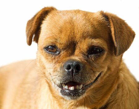 dullness: Interesting portrait of a one small doggy... Stock Photo