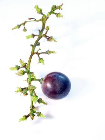 grape harvest: Conceptual image which can suggest economic or agricultural problem.