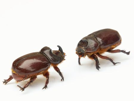 concurrent: Titans clash in the world of insects and bugs. Isolated on a white background. Stock Photo