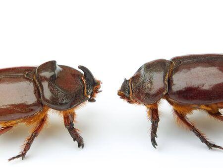 clash: Choque de titanes en el mundo de los insectos y bichos. Aislado en un fondo blanco.