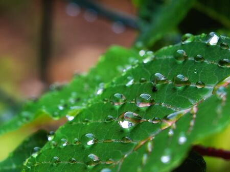 Closeup view of a leaf with drops on it after rain. Stock Photo - 5547108