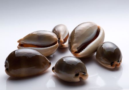 Low key image of sea snails on a clear background. Stock Photo - 5569536