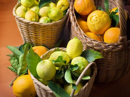 Baskets full of citrus fruits after harvest. Stock Photo - 6079645