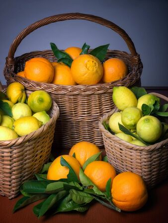 Baskets full of citrus fruits after the harvest. Stock Photo - 6139568