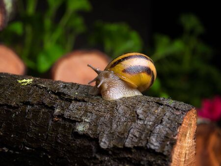 Snail crawling on the bark after spring rain somewhere in the  nature Stock Photo - 6330615