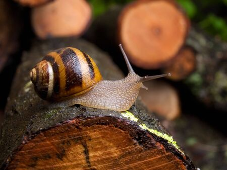 Snail crawling on the tree  bark after spring rain somewhere in the  nature Stock Photo - 6400085