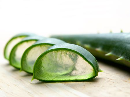 aloe vera plant: Leafs cross section of cactus known as Aloe vera, which is used in herbal medicine ad cosmetics. Stock Photo