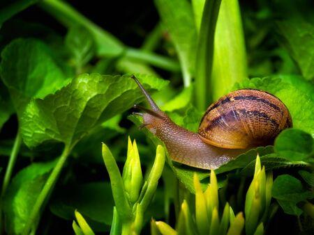 Caracol es rastreo despu�s de lluvia de primavera en alg�n lugar de la naturaleza.