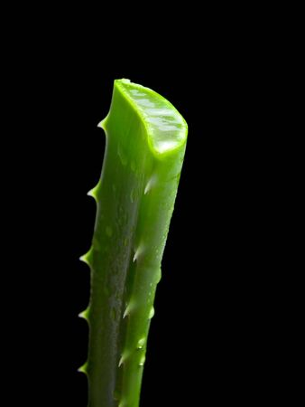 Trimmed leaf of  Aloe Vera cactus  isolated on a black background Stock Photo - 7969079