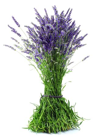 A bouquet of fresh lavender flowers isolated on white background. Stock Photo