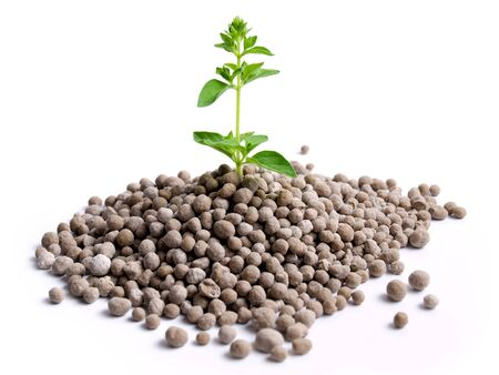 granules: Young plant is growing from the pile of nitrogen  fertilizer in granules. Stock Photo